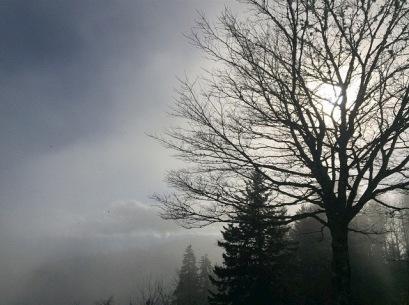 Smokey Tree (1)
